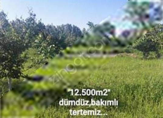 """ÇANAKKALE ÇAN'DA""""İÇİNDE EVİ OLAN""""12.500 M2 MEYVE BAHÇESİ"""" - Manzara"""