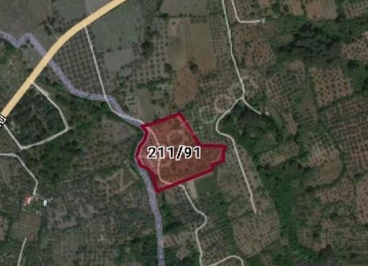 Selcuk Burgazda 13000 m2 satılık incir bahçesi - Harita