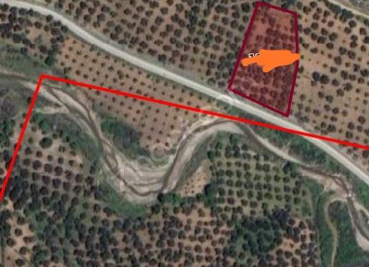 Gömeç Dursunlu'da Satılık Zeytinlik - Harita