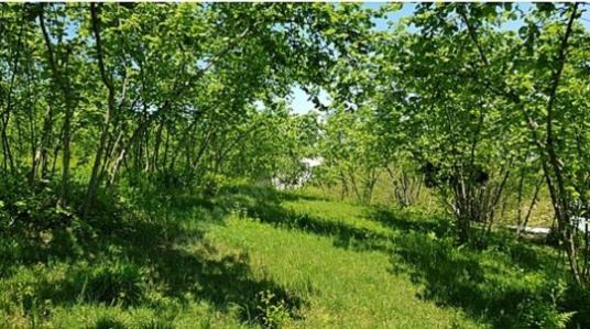 Ortahisar Kozluca'da Satılık Bahçe