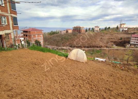 Trabzon Ortahisar Pelitli'de Satılık Çok Amaçlı Arsa - Arsa