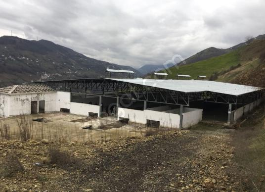 Akçaabat 5 dönüm Arazi üzerinde Hayvan çiftliği üretime hazır - Manzara