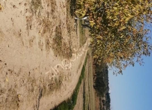 Saray Yuvalı'da Satılık Bahçe - Manzara