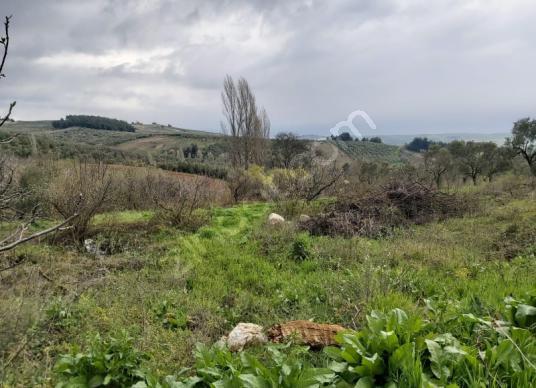 Bursa Mudanya Akköy mhde köyiçi satılık hobi bahçesi