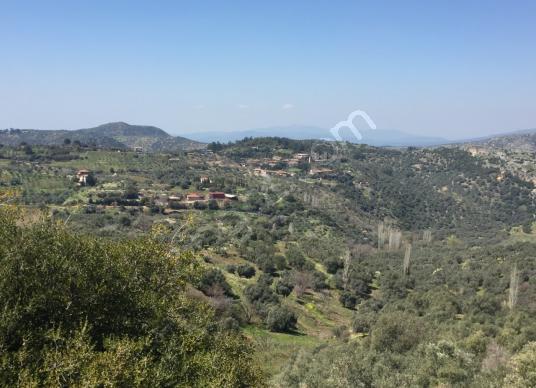 Selçuk Şirince'de Kadastrol Yolu Olan Manzaralı 10 Dönüm Bahçe - Manzara