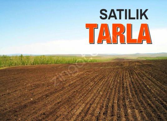 KARABURUN'DA 11.450 M2  SATILIK  TARLA - Arsa