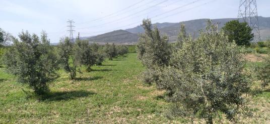 İzmir Menemen Emiralem Yayla da satılık bahçe - Arsa