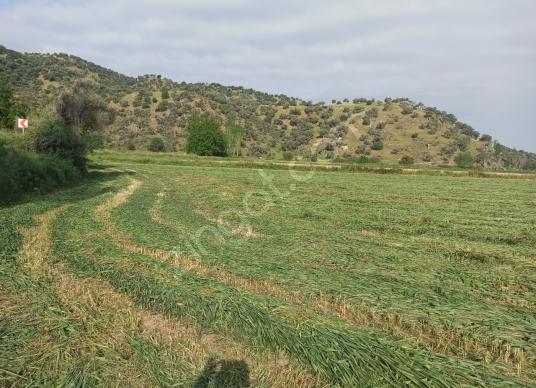Aydın Koçarlı Orhaniye'de Satılık 11 Dönüm Verimli Tarla - Arsa