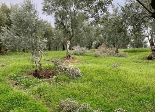 Orhangazi Yenisölöz'de Satılık Bahçe - Arsa