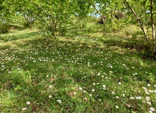 Perşembe Şenyurt mh yol kenarı bahçe