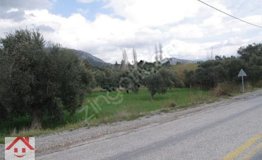 Milasta Yatırım Fırsatı Arazi - Arsa