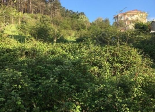 Beykoz Riva'da Satılık Muhtelif Arsa - Arsa