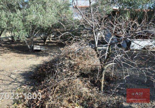 Urla Çeşmealtı'nda Satılık yeni imar alanında 1128 m2 arsa-1358