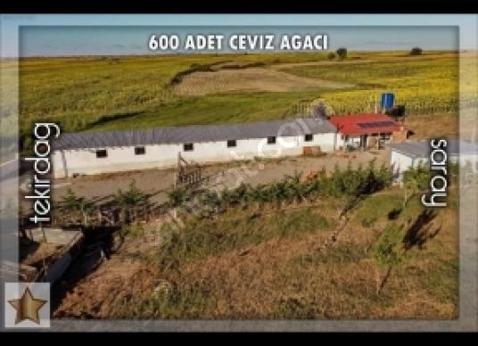 Satılık Çiftlik - Arsa
