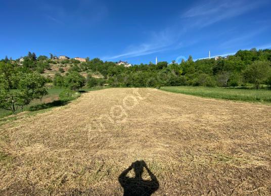 Yankı'danTokat Pazar Erkilet Arasında 2500 m2 Satılık Bahçe - Arsa