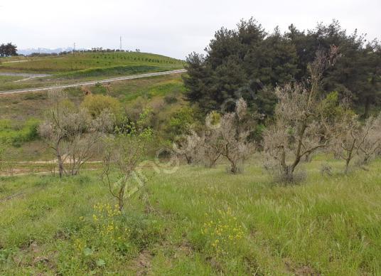 4204 square meters Vineyard For Sale in Osmangazi, Bursa - Arsa