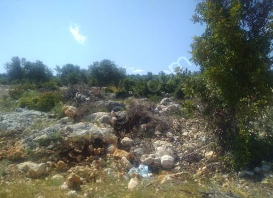 Erdemli koyuncu  mah satılık arsa - Manzara