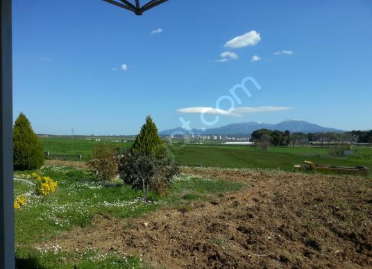 Kemalpaşa'da otoban yakını, yatırımlık zeytinlik - Arsa