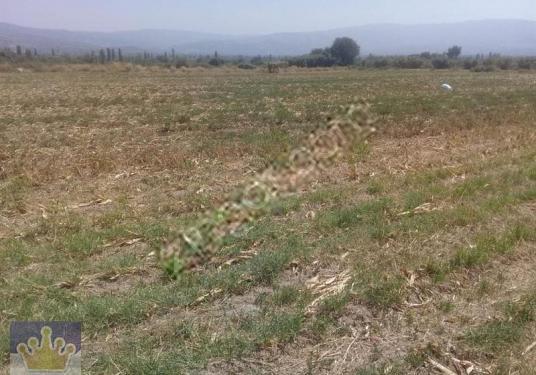 İZMİR KİRAZ CERİTLER' DE SATILIK TARLA KRAL EMLAK' DAN - Arsa