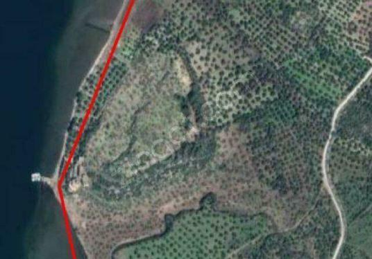 İZMİR DİKİLİ BADEMLİDE 2 ADET DENİZE 400 MT MESAFEDE TARLALAR - Harita