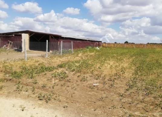 Pınarhisar Tozaklı Köyü'de Satılık Çok AMAÇLI ÇİFTLİK - Arsa