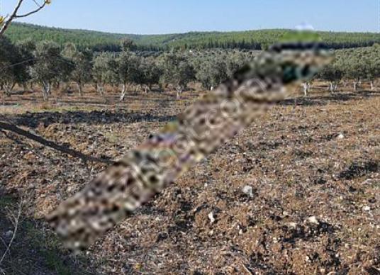 Menderes bulgurcada 6200 mt yatırımlik arazi - Arsa