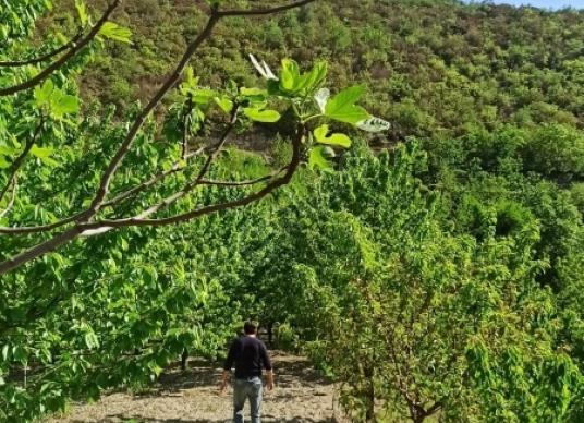 Amasya Merkez Yeşilyenice'de Satılık Bağ - Arsa