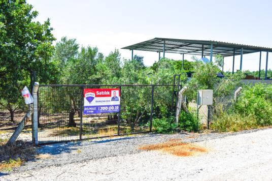 DİKİLİ KABAKUM'DA SATILIK ÇİFTLİK - Bahçe