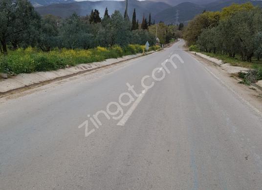 ADAPAZARI KARADAVUTLU DA 3500M2 ASFALT CEPELİ - Sokak Cadde Görünümü