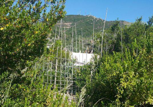 Muğla Bodrum Dereköyde Yola Cepheli 22000 m2 Narenciye Bahçesi - Manzara