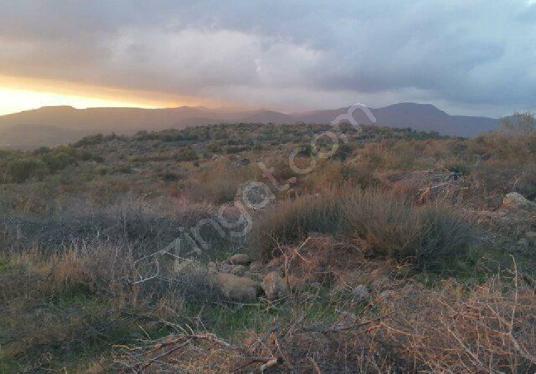 MENEMEN Süleymanlı'da 116.000  m2 Hayvan Besi Çiftligine Uygun - Arsa