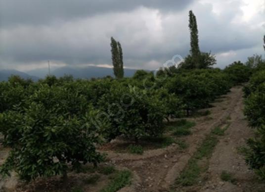Erzin Başlamış'ta Satılık Bahçe - Arsa