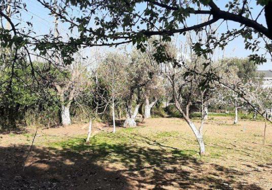 Kemalpaşa da Satılık 4250 m2 Çiftlik - KARADENİZ EMLAK - - Bahçe