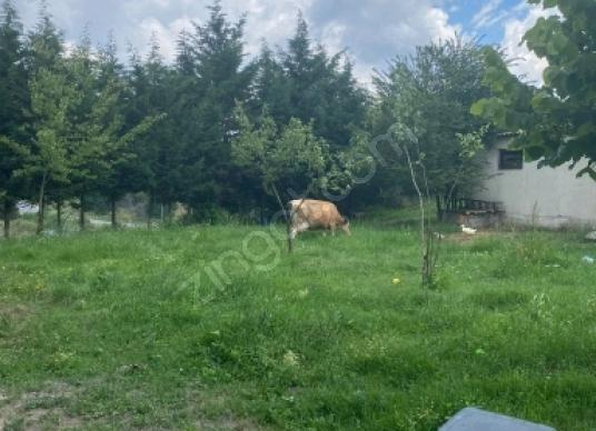 5000 square meters Farm For Sale in Çerkezköy, Tekirdağ - Arsa