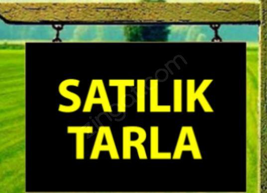 YILDIRIM EMLAKTAN ALANLIDA  SATILIK TARLA - Logo