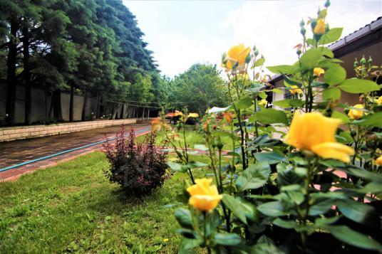 Silivri Gazitepe Eşyalı Kiralık Müstakil Ev 4 Dönüm Arazi İçinde - Bahçe