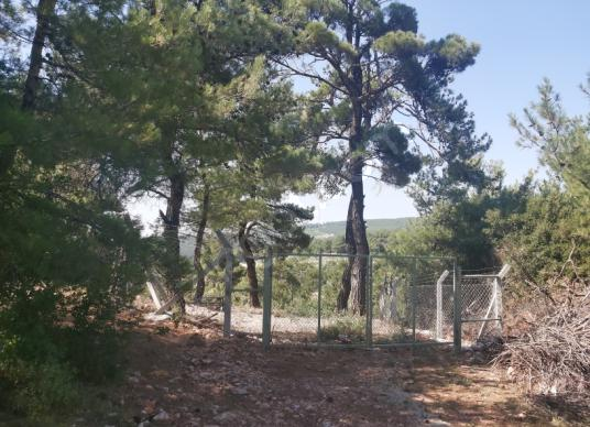Kemalpaşa Damlacık'ta Satılık 2b Bahçe - Arsa