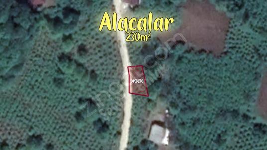 AYBASTI ALACALARDA 230m² FINDIK BAHÇEMİZ SATILIKTIR - undefined