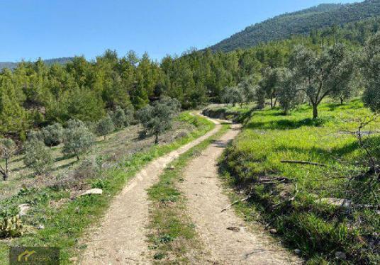 Aydın Güvenirde Baraja Sıfır 40 Dönüm Yatırımlık Zeytinlik - Arsa