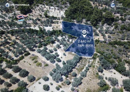 İzmir Karaburun İnecik'te Satılık Zeytin Ağaçlı Tarla - Arsa