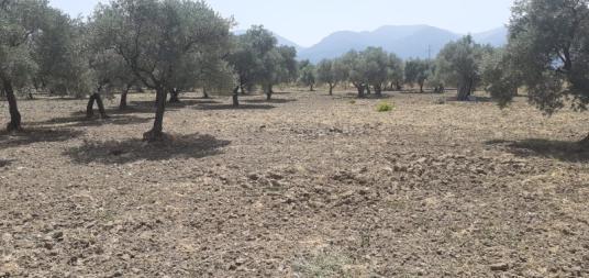 Kemalpaşa Sinancılar'da Satılık Bahçe - Arsa