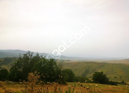YALOVA YENİ OTOYOL ALTI 30.124m2 MÜSTAKİL PARSEL SATILIK ARSA - Arsa