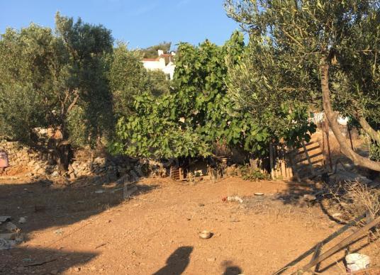 Milas Tuzabat köyünde  satılık konut imarlı arsa - Arsa