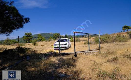 İZMİR KAVACIK SATILIK 12.285 M2 TARLA (CHANDLER CEVİZ BAHÇESİ) - Arsa