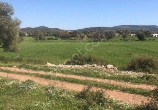Çeşme Germiyan Köyü Civarında Satılık Arsa - Arsa
